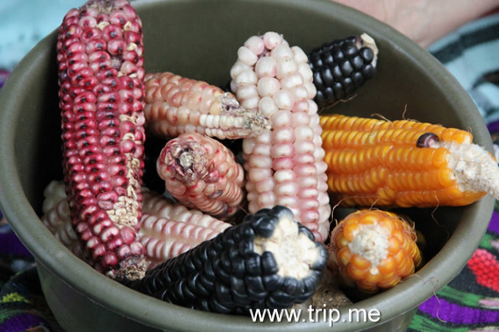 White, Red and Black Corn Varieties