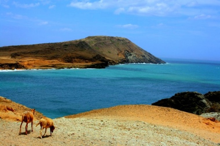 Goats on the beaches of La Guajira, Colombia.