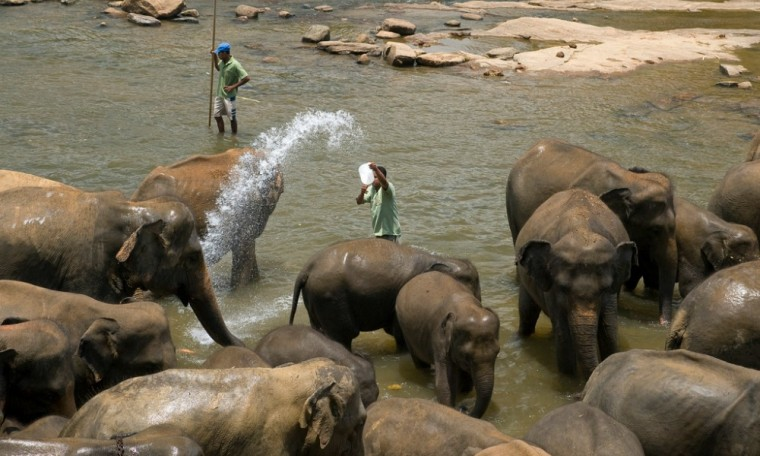 pinnawala elephant orphanage tour