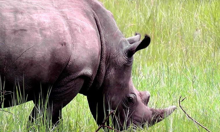 Rhino Uganda